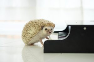 なぜピアノ教室にクレーマーやモンスターペアレントが集まってしまうか